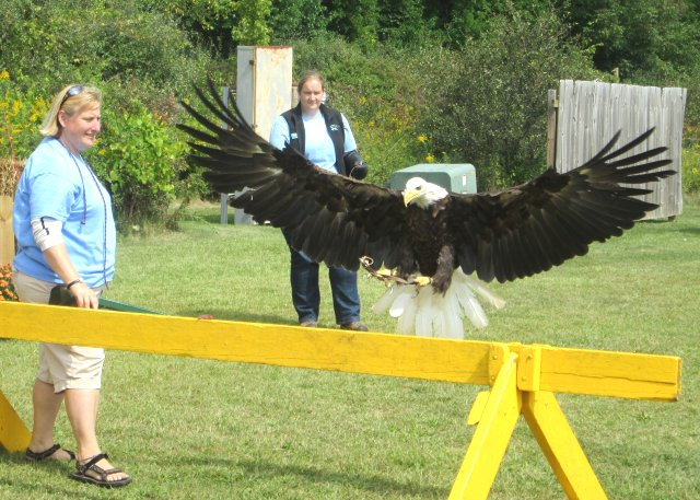 The eagle showing off.